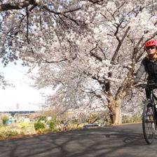 新入社員とお花見サイクリング